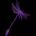 dandelion-violet